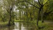 Řeka Bílina v lese stromy list