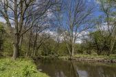 Řeka Bílina poblíž vesnice Stadice v jarní den