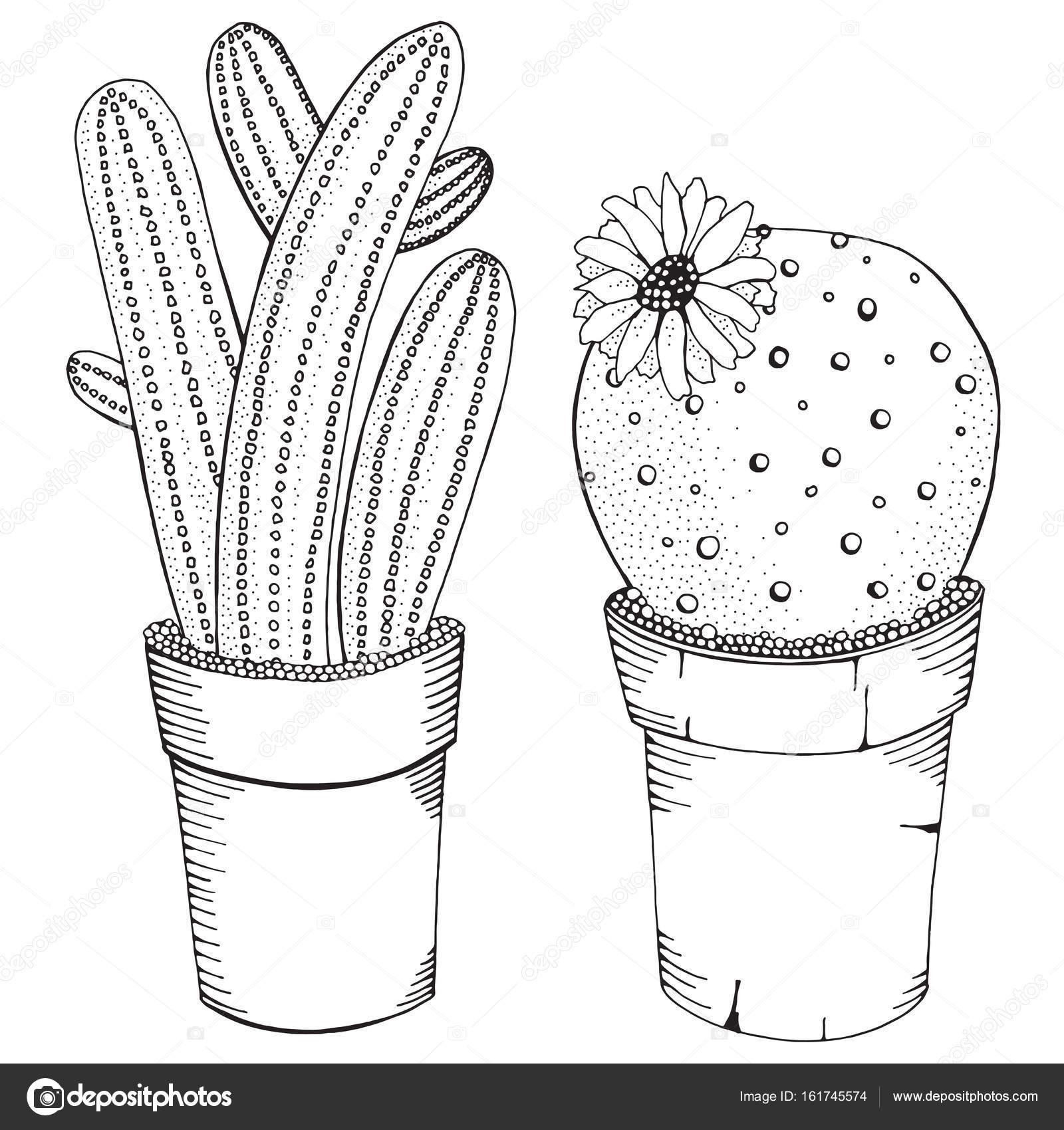 piante grasse da colorare