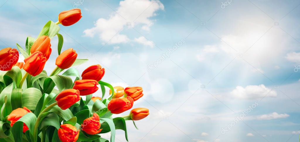 tulips on sky background