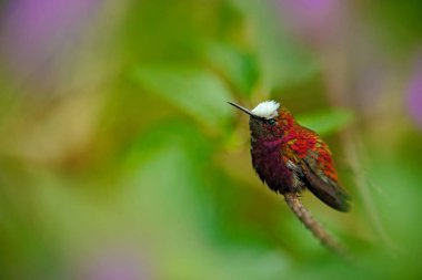 Wildlife scene with Hummingbird