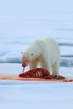 Wildlife scene with bear