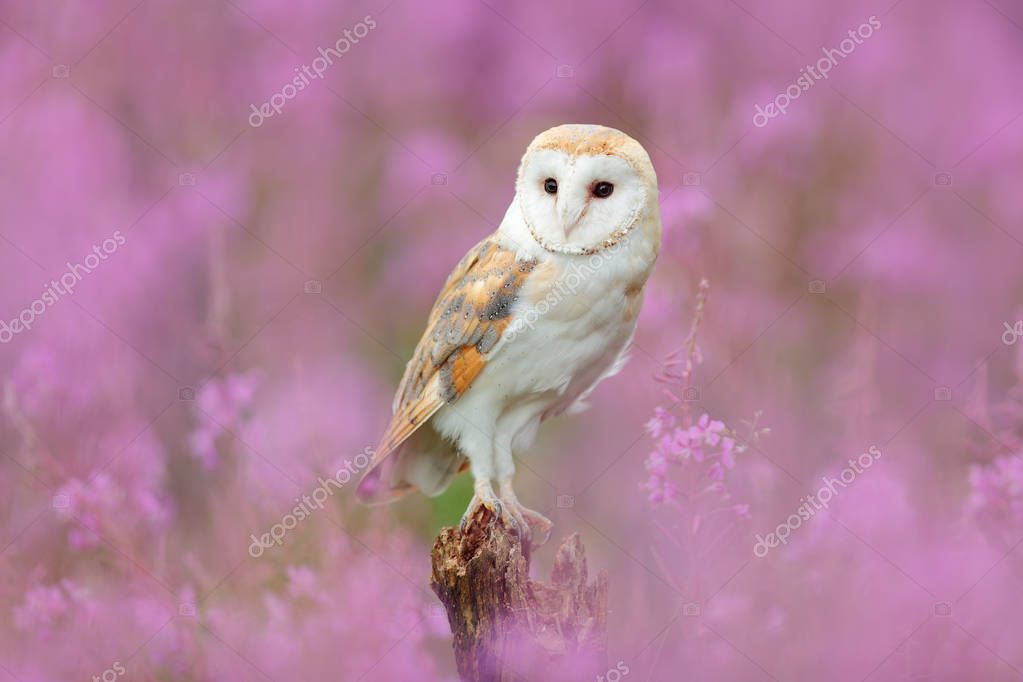 Beautiful owl in pink flowers