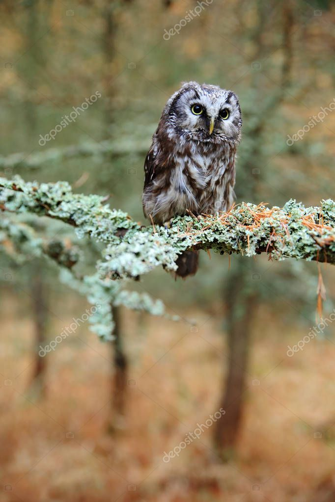 Beautiful owl in forest