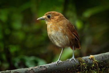 beautiful Birdwatching in Colombia