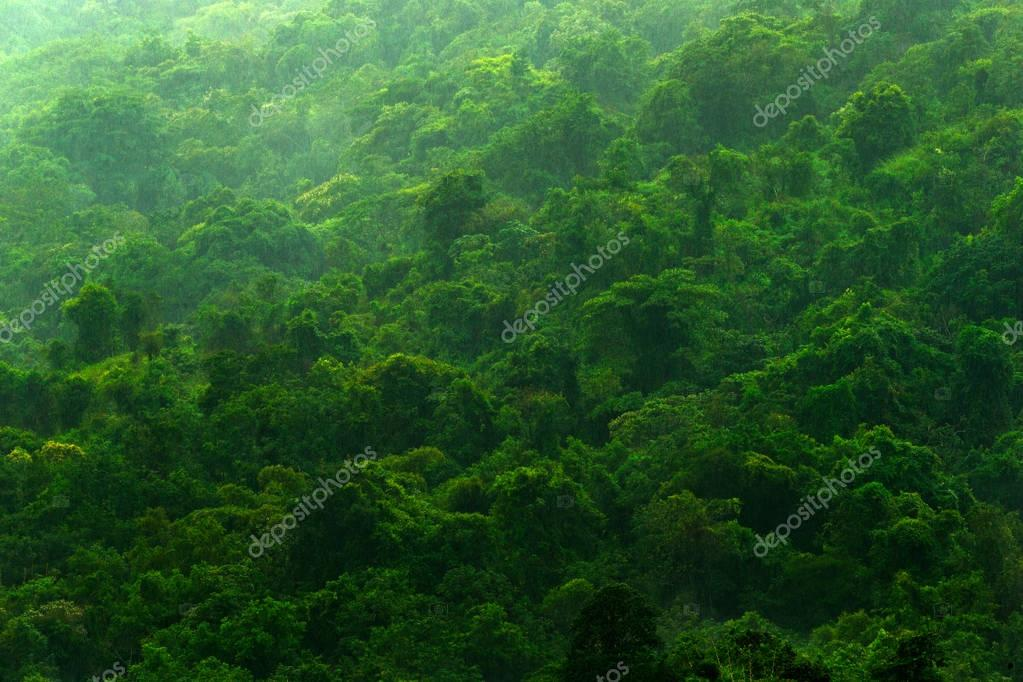 forest during rainy day