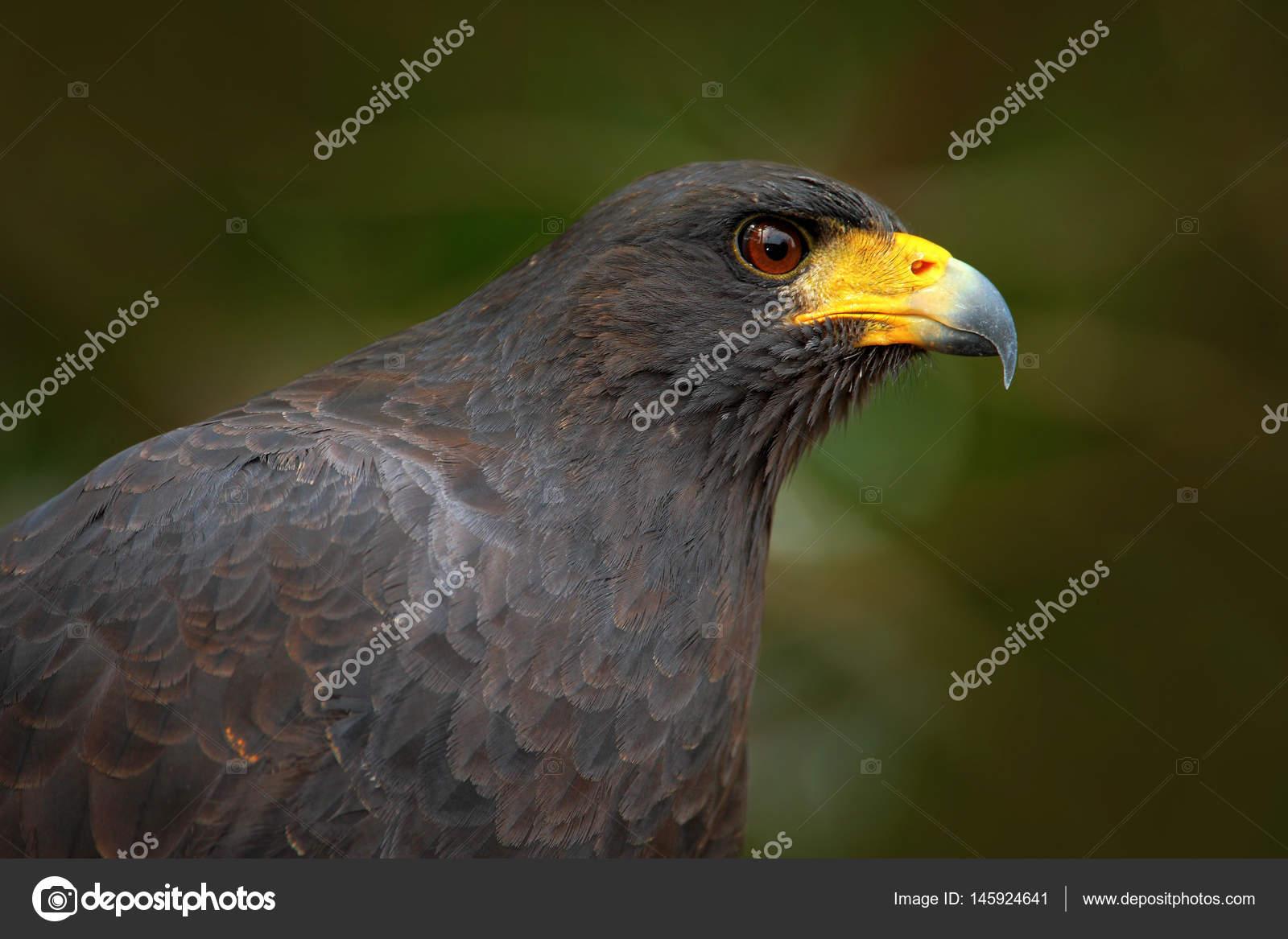 Μεγάλο μαύρο λεία και μεγάλο μαύρο πουλί