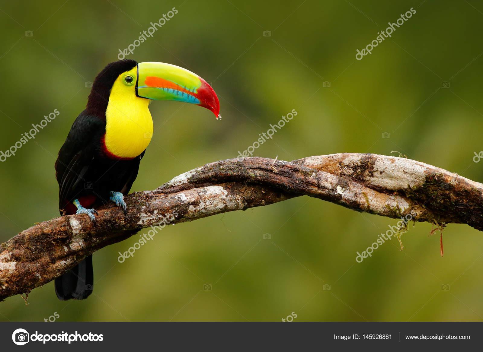 μεγάλο λατινικό πουλί εικόνες μαμά αγόρι πορνό κλιπ