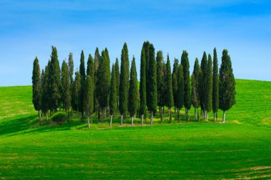 Green field with dark blue sky with white clouds and trees, Tuscany, Italy. Tuscany landscape in summer. Summer green meadow with cypress trees. Summer landscape in Tuscany. stock vector