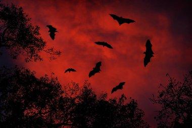 Night wildlife with bats