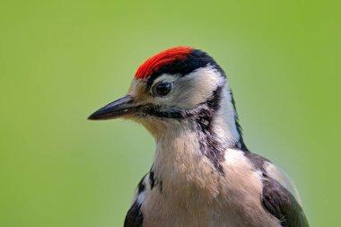 Detail portrait of bird