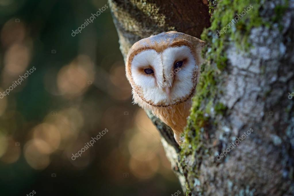 Barn owl sitting on tree trunk