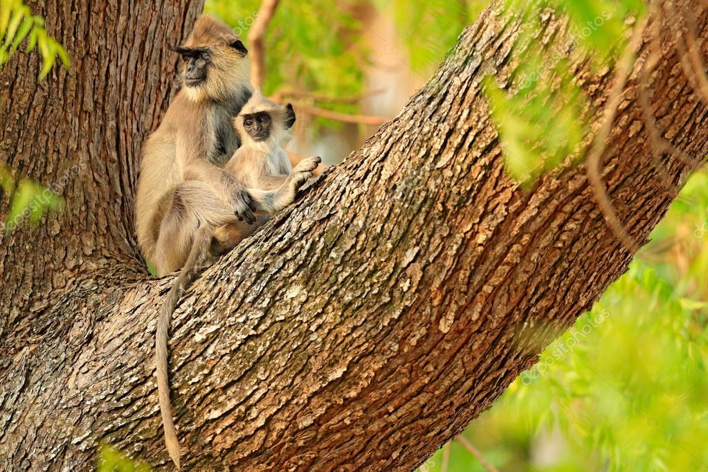 Monkeys with long tails