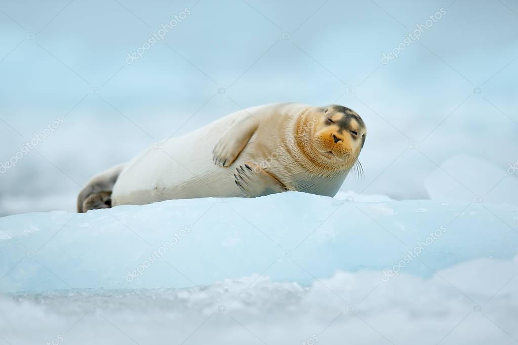 Blue icebreaker with seal