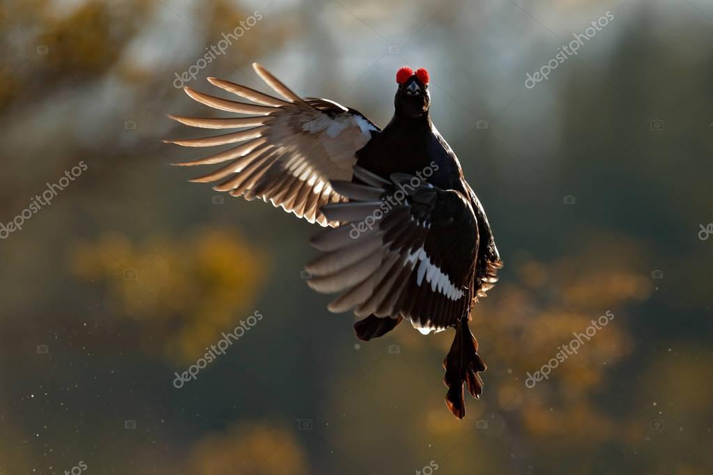 Flying bird in fly