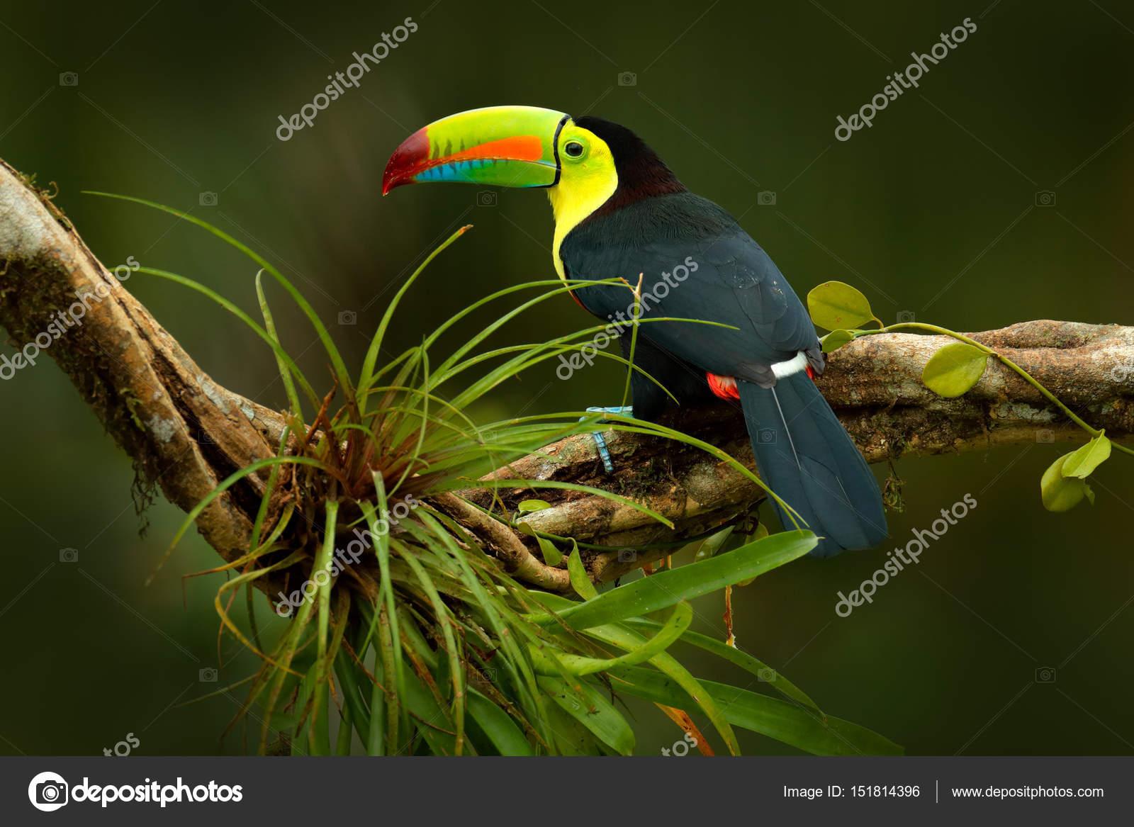 Φουτανάρι με μεγάλο πουλί