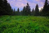 Dvorský les kvetoucí louku na jaře