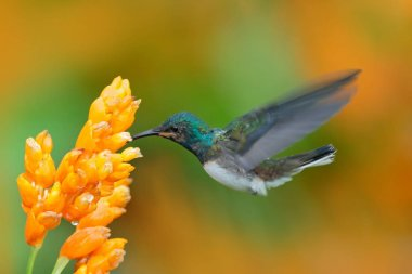 Hummingbird with tropical flower