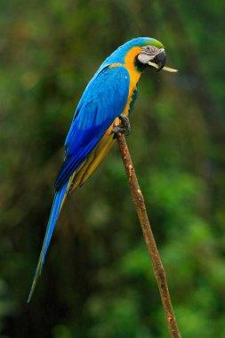 """Картина, постер, плакат, фотообои """"прекрасный попугай в естественной среде обитания """", артикул 151814400"""