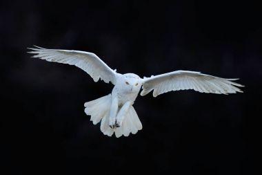 Beautiful owl in nature habitat