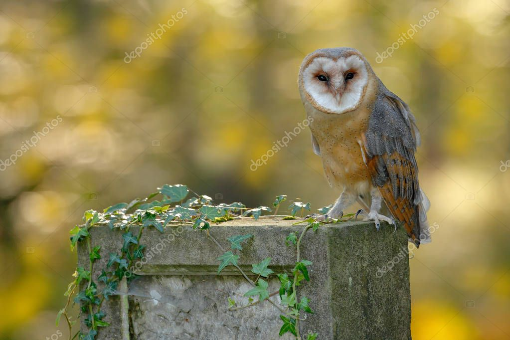 Beautiful owl in nature habitat