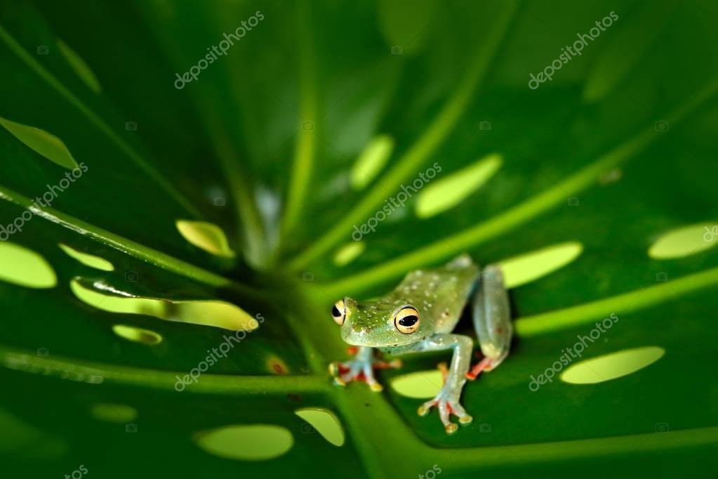 Frog sitting on the big green leaf