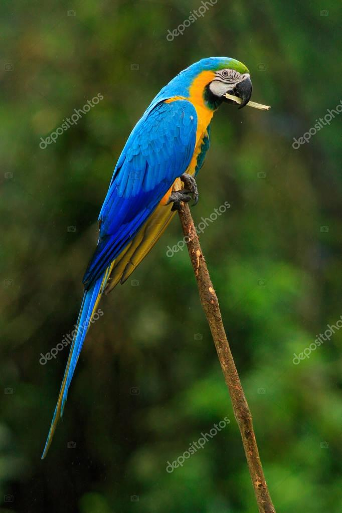 Beautiful parrot bird in nature habitat