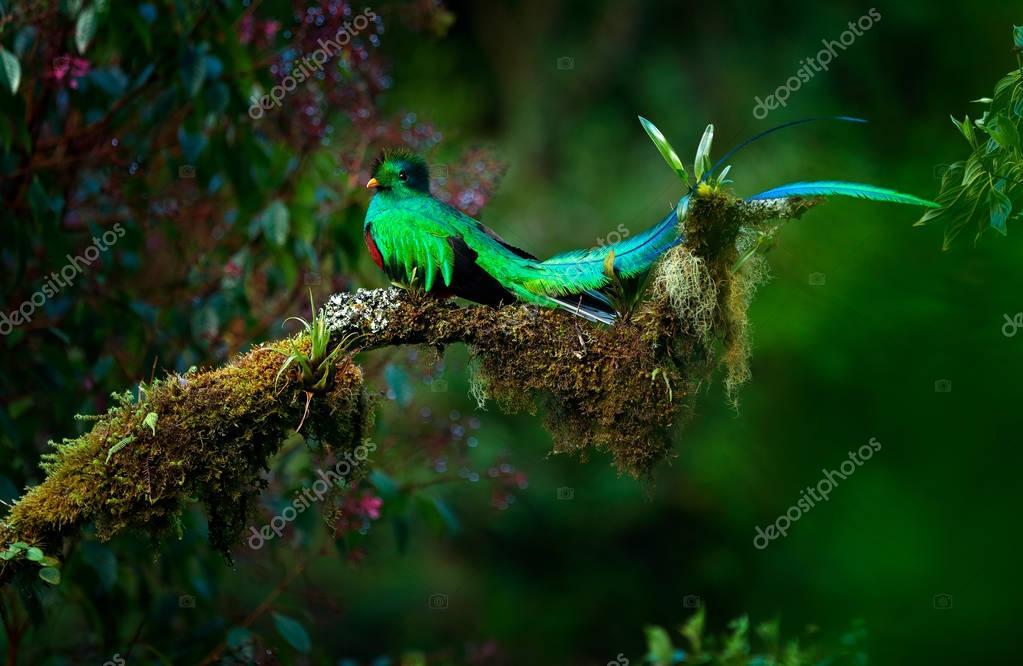 Resplendent Quetzal green birds