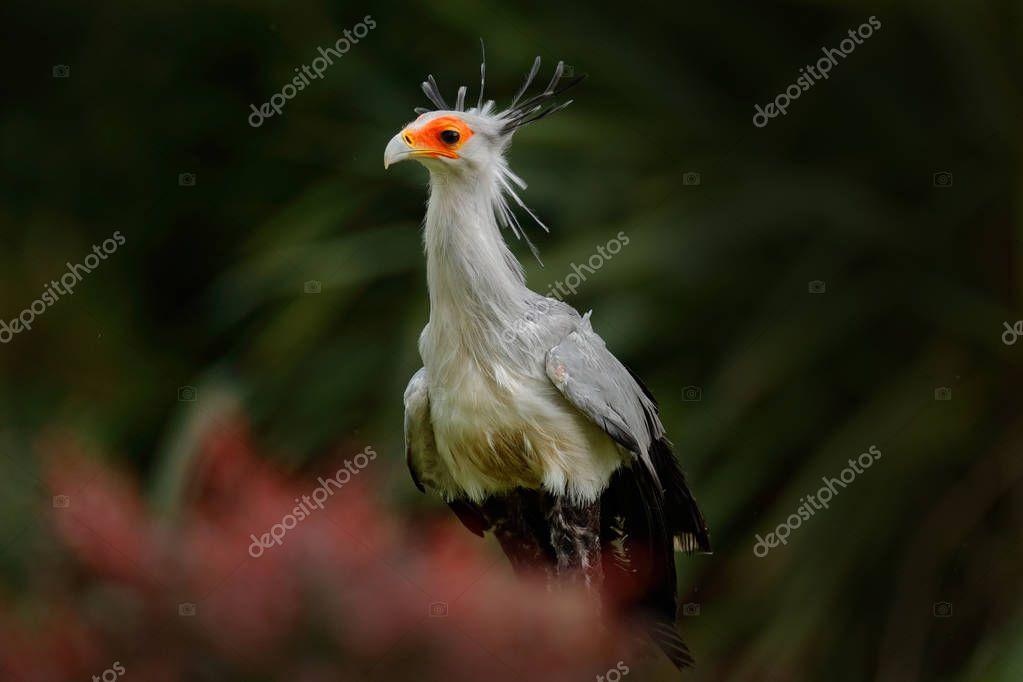 Grey bird with orange face