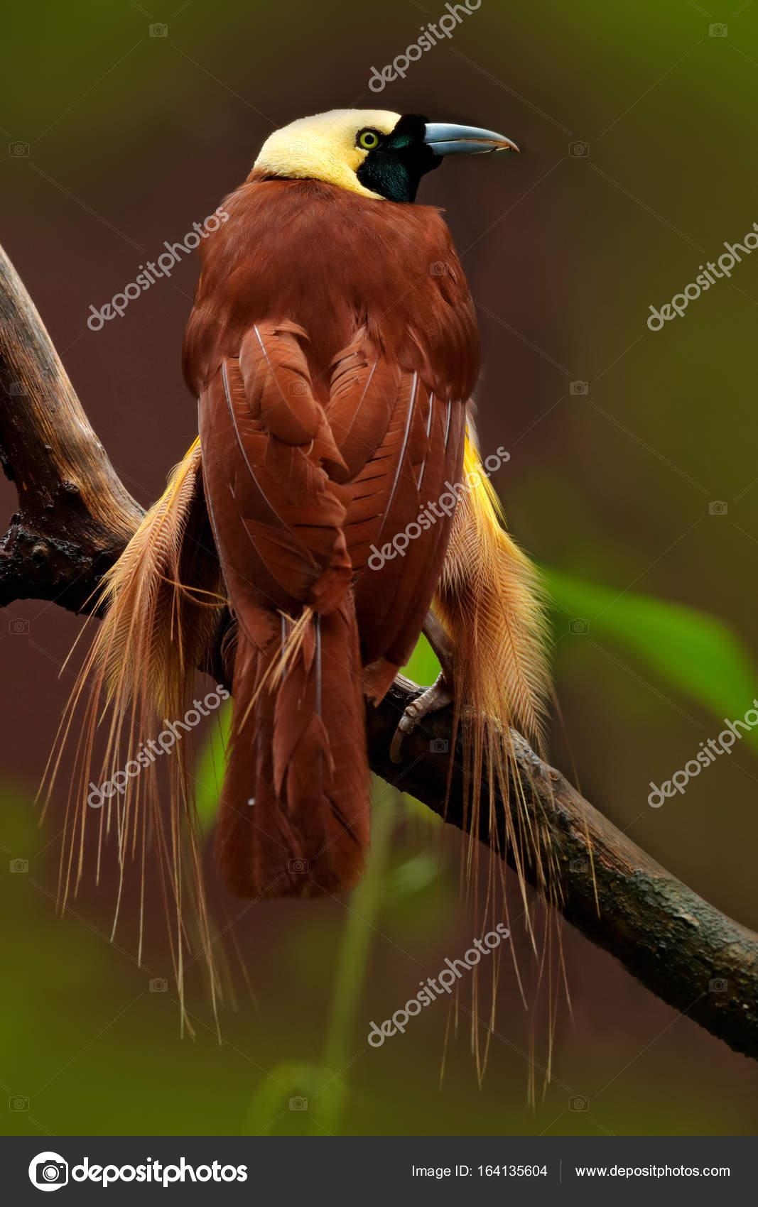 Www μεγάλο πουλί pic