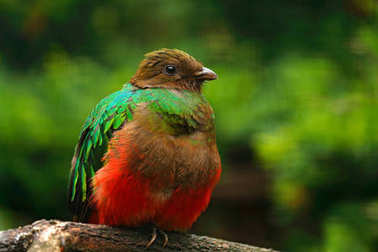 Exotic bird in forest