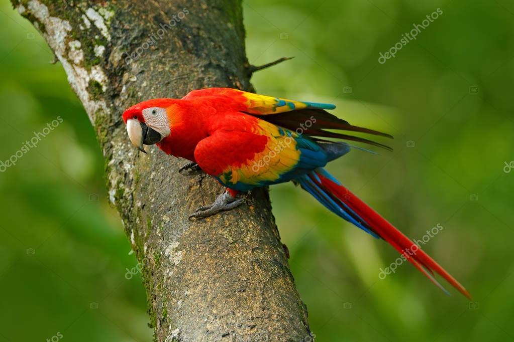 Parrot Scarlet Macaw Ara