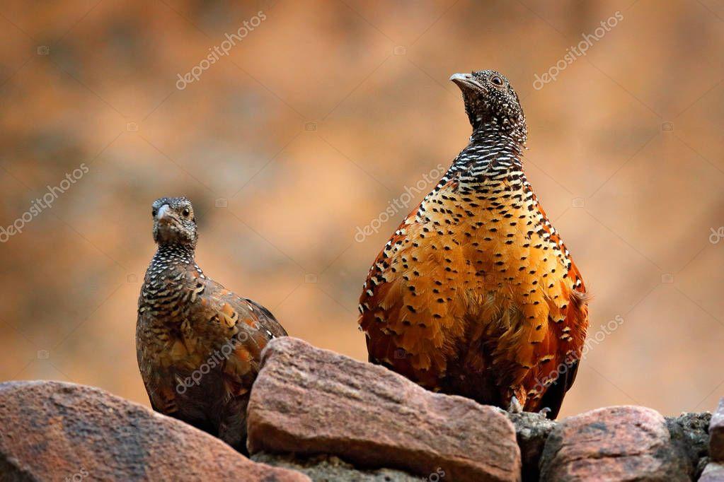 Birds sitting on stone