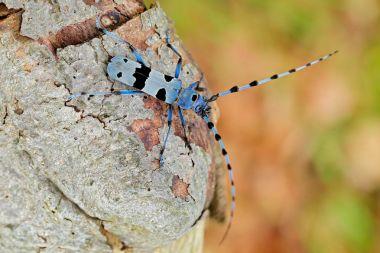 Beautiful blue incest