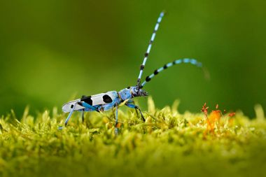 Blue insect on grass
