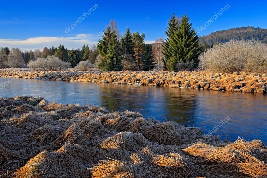 forest landscape with river meander