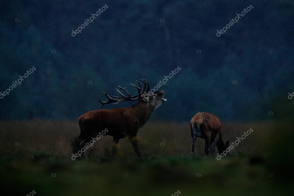 Wildlife animals behavior in forest