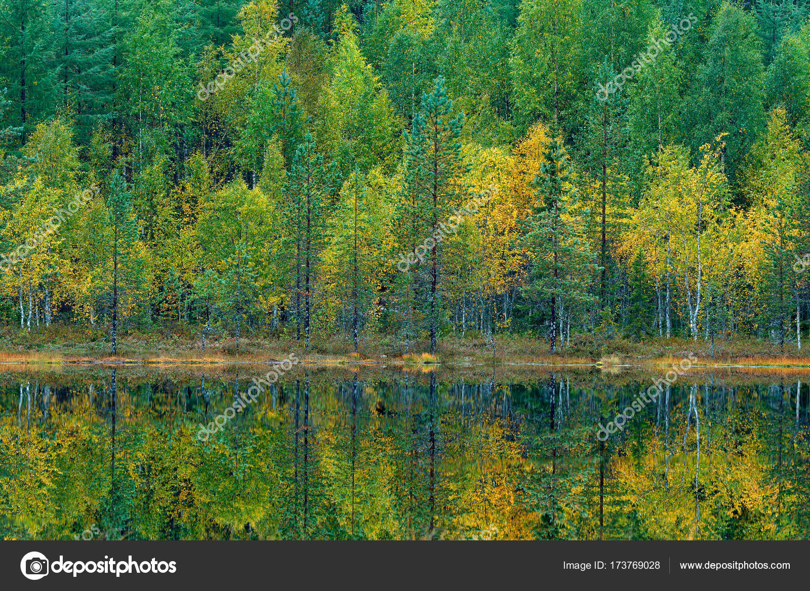 Wood with colored trees. — Stock Photo © OndrejProsicky #173769028
