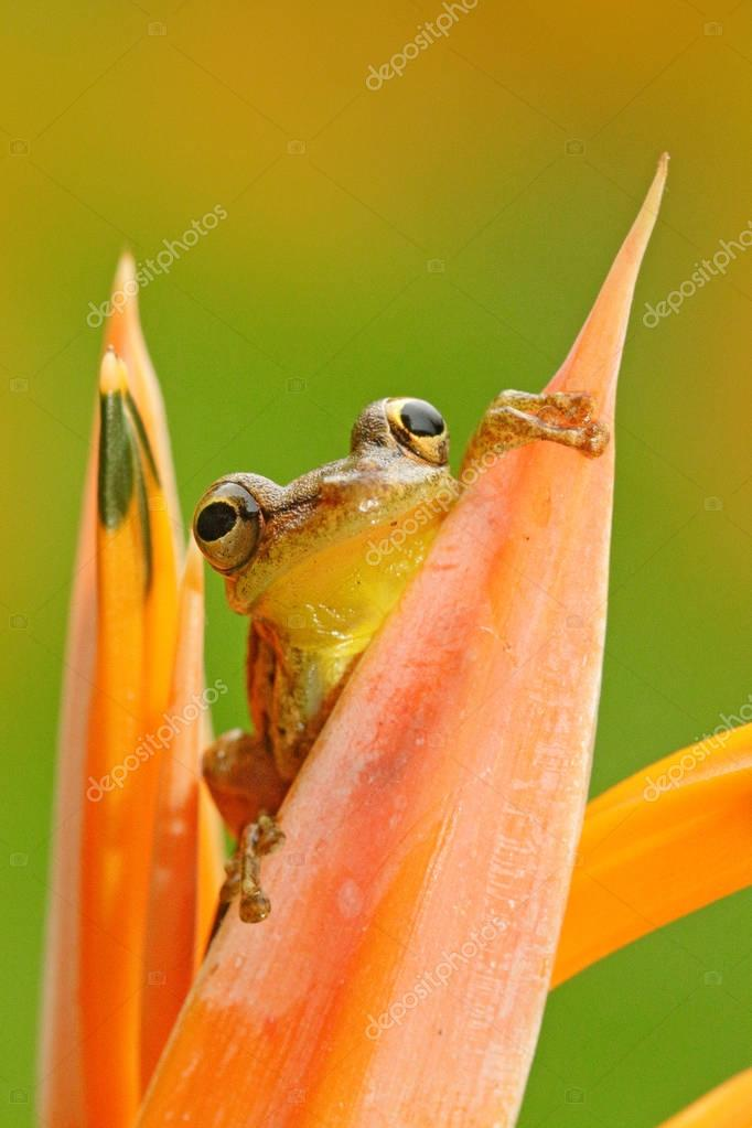 Frog in tropic forest
