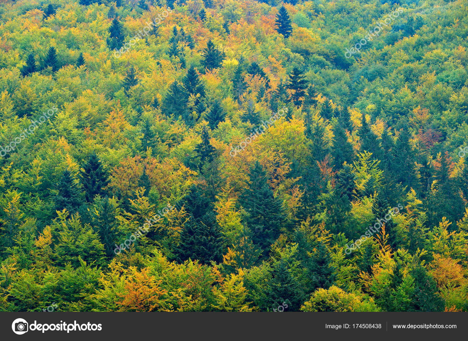 Wood with colored trees. — Stock Photo © OndrejProsicky #174508438
