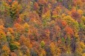 Fotografie Dřevo s barevnými stromy