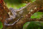 Snake on tree trunk