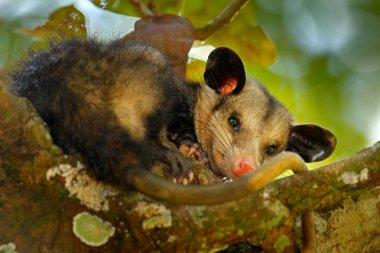 Opossum sitting on tree
