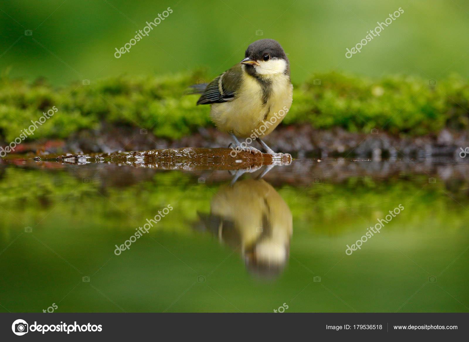 Velké německé ptáky