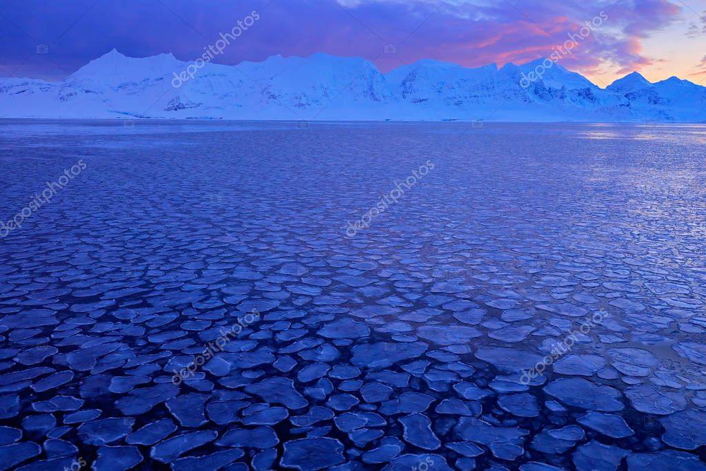 White snowy mountain, blue glacier Svalbard, Norway. Ice in ocean. Iceberg twilight in North pole. Pink clouds with ice floe. Beautiful landscape. Night ocean with ice. Land of ice. Winter Arctic.