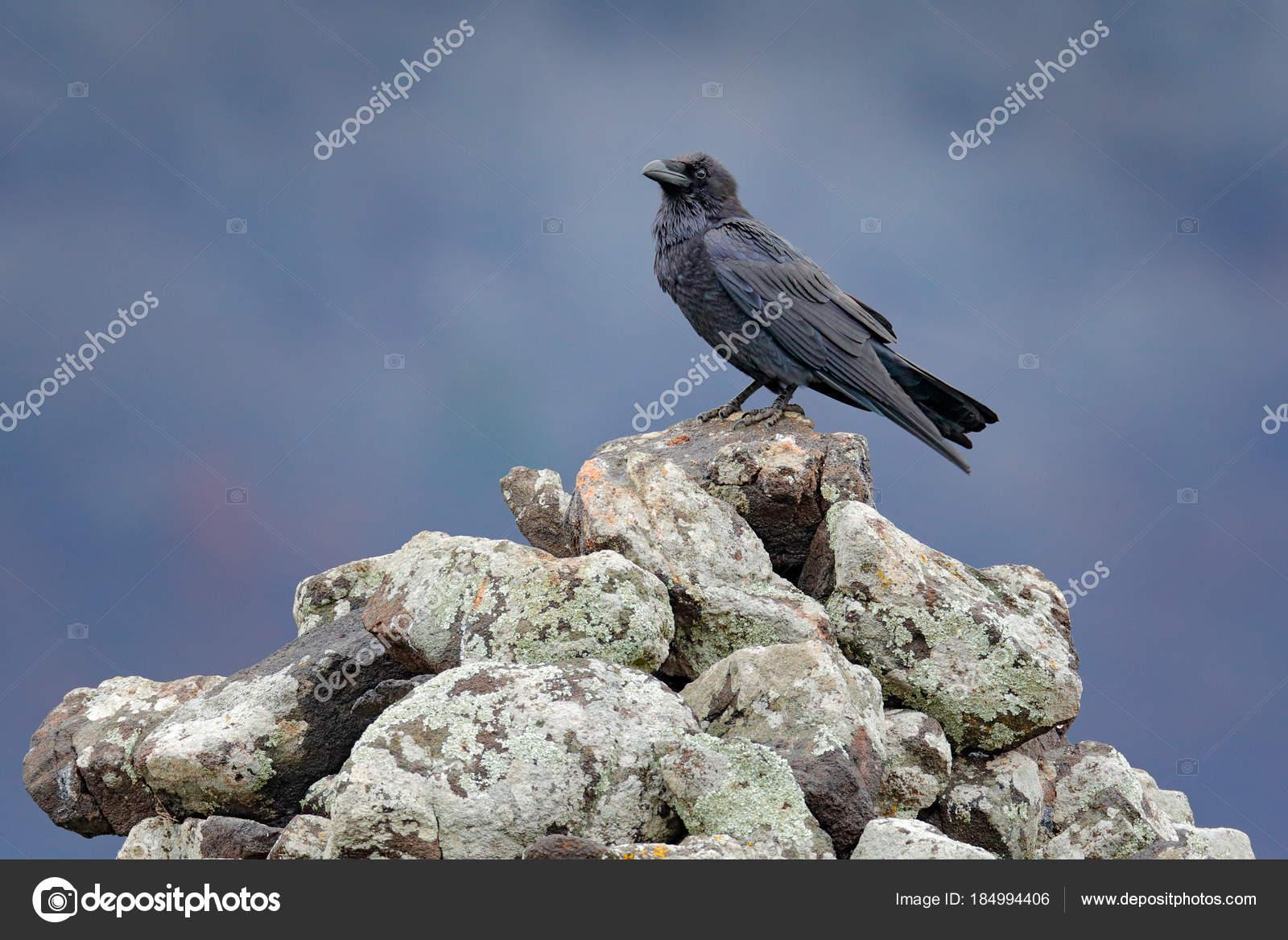 Φωτογραφία του μεγάλο μαύρο πουλί