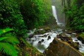 Fényképek La Paz vízesés kert, zöld trópusi erdők, a közép-völgy, Costa Rica. Utazás a Costa Rica. Üdülés trópusi erdő. Folyó a Fehér-patak, esős napon, zöld növényzet, nemzeti park