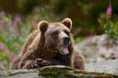 brown bear sitting on grey stone