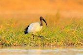 Bird in water grass