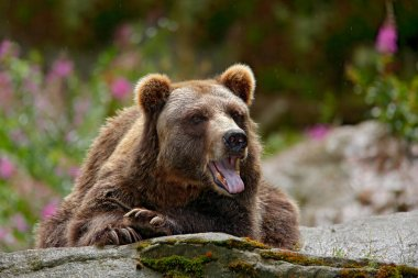 brown bear sitting on grey stone